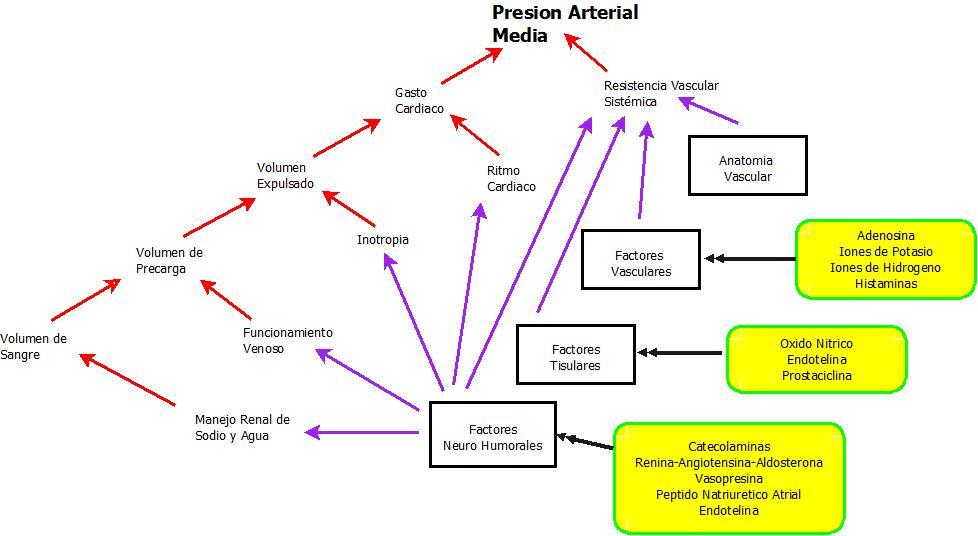 Excepcional Diagrama De Arteria Humana Ornamento - Imágenes de ...